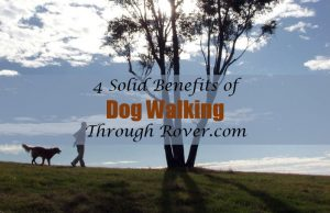 benefits of dog walking